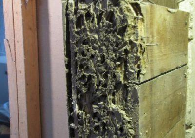 Termite mud
